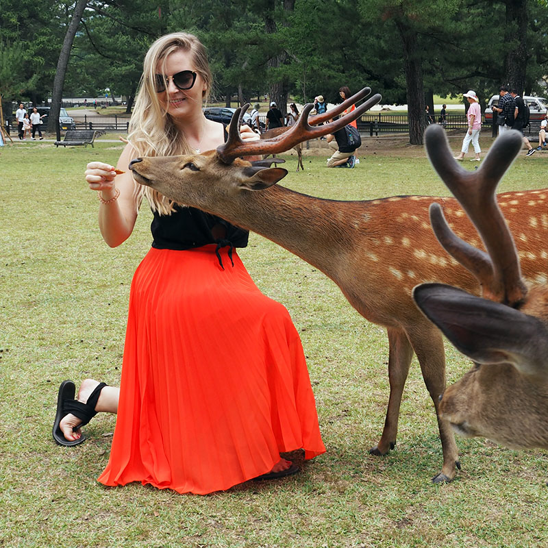 Alice feeding deer in Nara, Japan