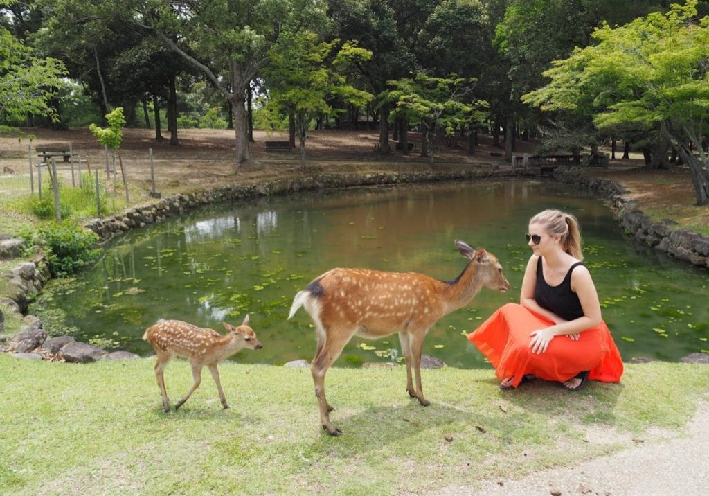Visiting the sacred deer in Nara, Japan - The Travel Escape